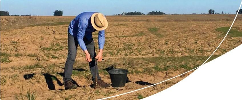 coleta de amostras de solo da lavoura de arroz