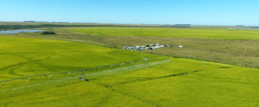 Imagem aérea da segunda estação: Produção de arroz e sementes sob pivô